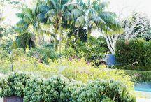 Garden / by Shell McClure