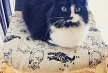 Loaf of the Day / Cat Loafs, Kitty Loafs, and Loaf Cats - Featured Daily