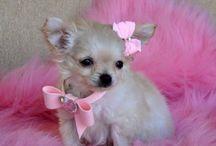 Puppies / by Brenda Larson
