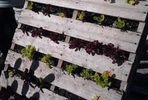 Urban Gardening / Urban gardens, urban farms, community garden plots, container  gardens, patio gardens, small space gardening, and other unique ideas for city farming.