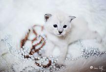 Little cat / Gatitos, belleza felina