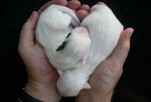 Hearts<3<3
