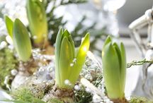 decorations for winter & spring / Flowers and decorations for outdoors and indoors