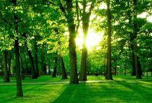 İnsan ve Doğa (2)