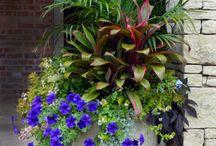 kert/udvar/virágok