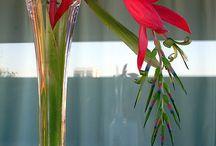 flores sutil