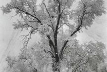 Photography- Ansel Adams / by Carol Jones