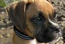 Honden kunnen praten! / Ook jouw hond kan praten!  Je hoeft alleen maar te luisteren naar zijn taal.
