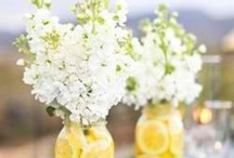 Themed Events - Lemon and Lime its summertime