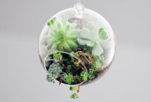 Terrariums / by Melanie Newson