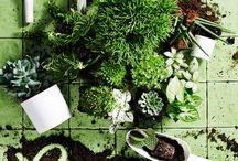 Green and plants everywhere / amo ogni pianta o arbusto....sopratutto in casa