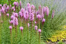 garden \\ planting \\ combinations