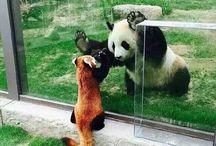 Pandziochy