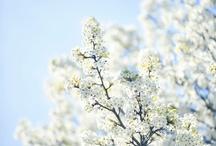 SPRING / Seasonal