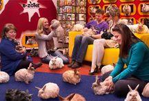 Bunnies! / Step inside the B-Zone. We love bunnies!