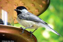 Beautiful Birds / I love birds! / by Shinrin Art
