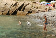 good news if you are going to Isola d'Elba (Tuscany) with your dog