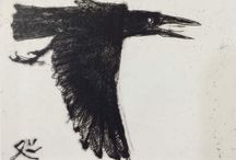 Corvidae / Ravens and Crows, mostly