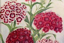 karafiáty carnation dianthus