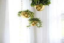 Hanging beauties