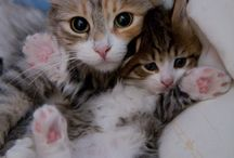 How cute! / This kittens are the cutest thing I've ever seen