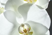 Orchids...my favorite flower / by Hollands Grove Healing