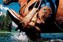 Horsey Love!