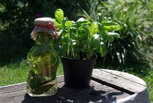 OLEJE,PESTA,DIPY / bylinkové oleje, pesta a dipy ke grilování apod.