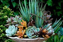 Succulents / Succulents + air plants are like peanut butter + jelly / by Air Plant Design Studio