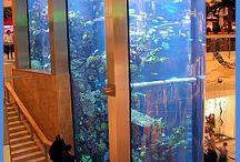 new Aquarium s