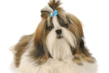 Dog Breeds / Learn everything about dog breeds including personality, size, pictures and much more at dogexpress.in