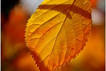 Autumn / Barevný podzim