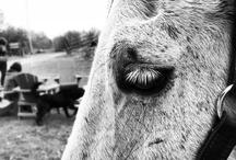 Horses / Photos of horses & riding