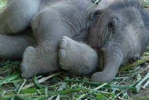 ELEPHANTS AND BABIES / by Sandra Hozey