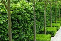 Garden designs/ideas