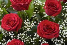 Rosas e Flores