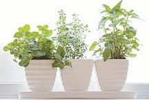 Growing Herbs and Veggies