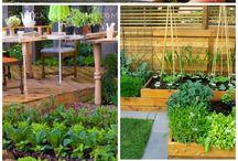 garden and veggie garden