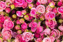 Libretas Flores