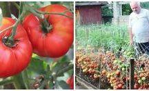 Grădina & Terasă