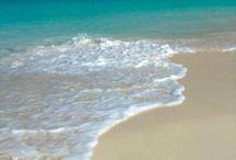 Sea & Shell