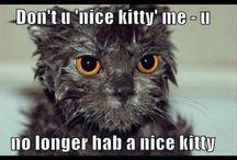 LOL Cats / by Jen James