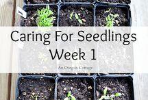 Seedling care