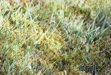 Fjernelse af mos i græsplænen