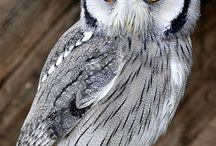 Owls / Beautiful birds