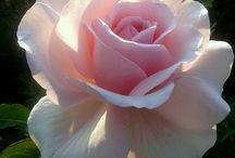 Flores para momentos românticos