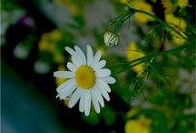 билки и растения