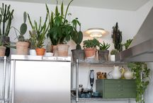 plants. / by a n n e l i e s