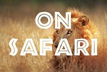On Safari / Going on safari? Get inspired from this collection of safari photography.