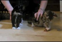 Funny Animal Clips